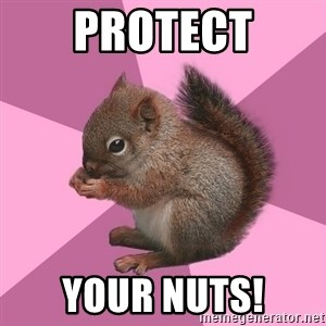 Shipper Squirrel - protect your nuts!