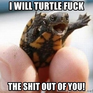 angry turtle - I will turtle fuck the shit out of you!