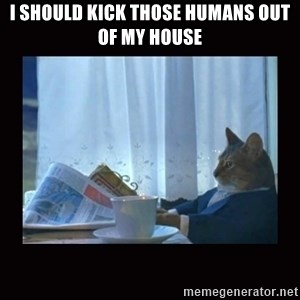 i should buy a boat cat - I should kick those humans out of my house