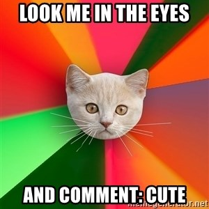 Advice Cat - LOOK ME IN THE EYES AND COMMENT: CUTE