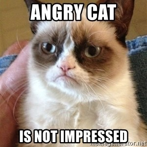 The Angry Cat - AngRy cat Is not impressed