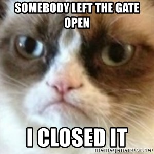 angry cat asshole - somebody left the gate open i closed it
