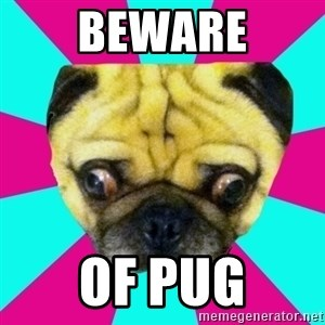 Perplexed Pug - BEWARE OF PUG