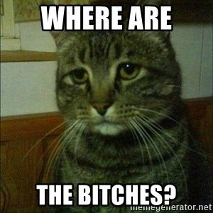 Depressed cat 2 - Where are  The bitChes?