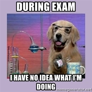 Dog Scientist - during exam i have no idea what i'm doing