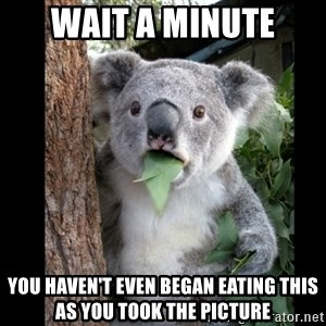 Koala can't believe it - wait a minute you haven't even began eating this as you took the picture