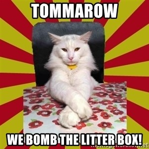 Dictator Cat - TOMMAROW WE BOMB THE LITTER BOX!