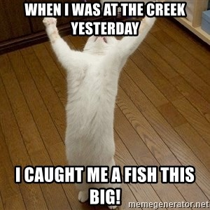 praise the lord cat - when i was at the creek yesterday i caught me a fish this big!