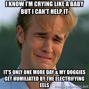 90s Problems - I KNOW I'M CRYING LIKE A BABY BUT I CAN'T HELP IT IT'S ONLY ONE MORE DAY & MY DOGGIES GET HUMILIATED BY THE ELECTRIFYING EELS