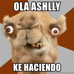 Crazy Camel lol - Ola ashlly  ke haciendo