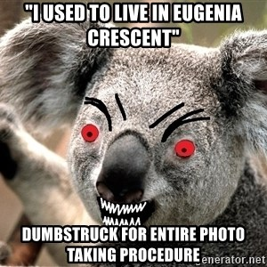 """Abortion Koala - """"I USED TO LIVE IN EUGENIA CRESCENT"""" DUMBSTRUCK FOR ENTIRE PHOTO TAKING PROCEDURE"""