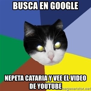 Winnipeg Cat - busca en google NEPETA CATARIA Y VEE EL VIDEO DE YOUTUBE
