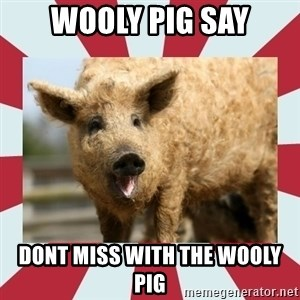 Wooly Pig - Wooly Pig say dont miss with the wooly pig