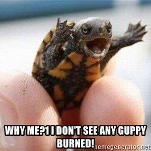 angry turtle -  Why me?1 I don't see any guppy burned!