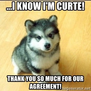 Baby Courage Wolf - ...I know I'm curte!  Thank you so much for our agreement!