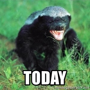 Honey Badger Actual -  Today
