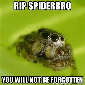 Spiderbro - rip spiderbro you will not be forgotten