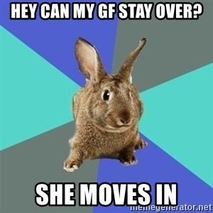 Roommate Rabbit - hey can my gf stay over? she moves in