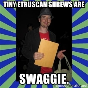 Swag fag chad costen - Tiny Etruscan ShrewS ARE SWAGGIE.