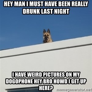 Roof Dog - hey man i must have been really drunk last night i have weird pictures on my dogophone hey bro howd i get up here?