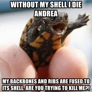 angry turtle - Without my shell i die andrea my backbones and ribs are fused to its shell. are you trying to kill me?!