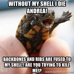 angry turtle - Without my shell i die andrea! backbones and ribs are fused to my shell.! are you trying to kill me!?