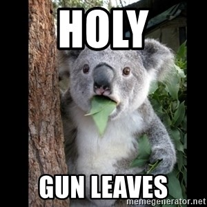 Koala can't believe it - HOLY GUN LEAVES