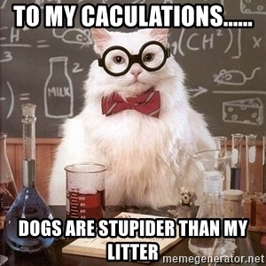 Chemistry Cat - TO MY CACULATIONS...... DOGS ARE STUPIDER THAN MY LITTER