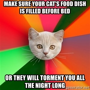 Advice Cat - make sure your cat's food dish is filled before bed or they will torment you all the night long