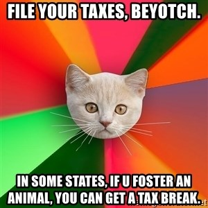 Advice Cat - file your taxes, beyotch. in some states, if u foster an animal, you can get a tax break.