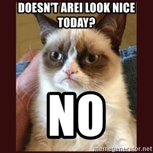 Tard the Grumpy Cat - Doesn't arei look nice today? No