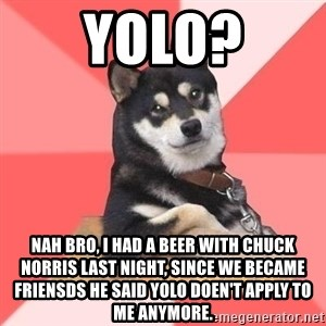 Cool Dog - yolo? nah bro, i had a beer with chuck norris last night, since we became friensds he said yolo doen't apply to me anymore.