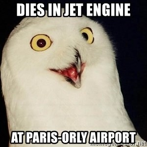 Orly Owl - dies in jet engine at paris-orly airport
