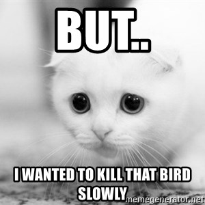 Sadcat - But.. I wanted to kill that bird slowly