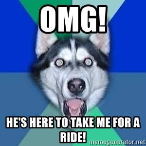 Spoiler Dog - Omg! He's here to take me for a ride!