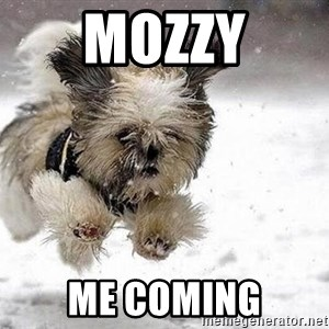Cute Dog - MOZZY ME COMING