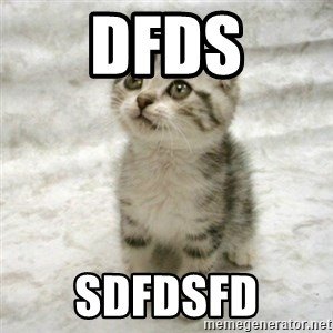 Can haz cat - dfds sdfdsfd