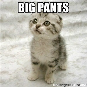 Can haz cat - big pants