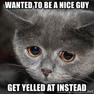 Sadcat - wanted to be a nice guy get yelled at instead