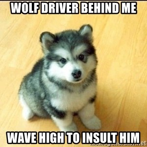 Baby Courage Wolf - wolf driver behind me wave high to insult him
