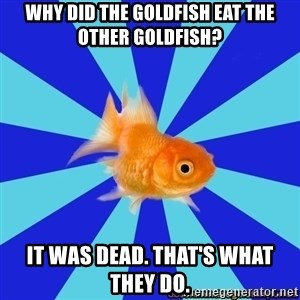 Absentminded Goldfish - why did the goldfish eat the other goldfish? It was dead. That's what they do.