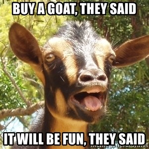 Illogical Goat - Buy A Goat, They said It will be fun, they said