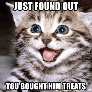 HAPPY KITTEN - just found out you bought him treats