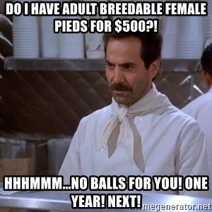soup nazi - Do I have adult breedable female pieds for $500?! HHHMMM...No balls for you! One year! Next!