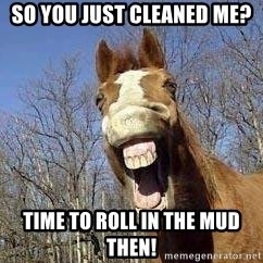 Horse - So you just cleaned me? Time to roll in the mud then!