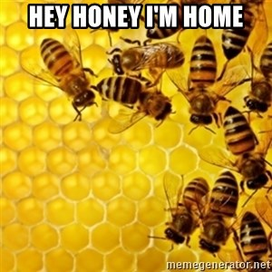 Honeybees - HEY HONEY I'M HOME