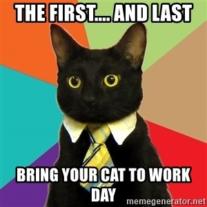 Business Cat - The first.... And Last Bring your cat to work day