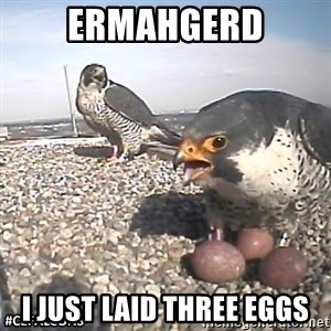 #CEFalcons - ERMAHGERD I JUST laid THREE eggs