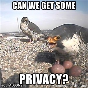#CEFalcons - Can We Get Some Privacy?