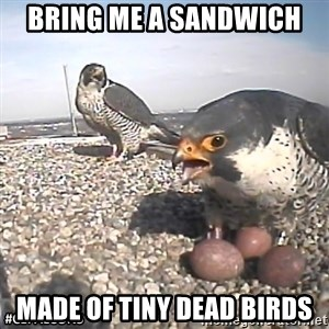 #CEFalcons - Bring me a sandwich made of tiny dead birds